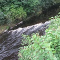 Radisson Roe Park Resort - Nature - Roe River2