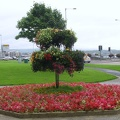 Derry - Guildhall - Flowers