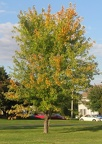 Fall Foliage - Bourbaonnais